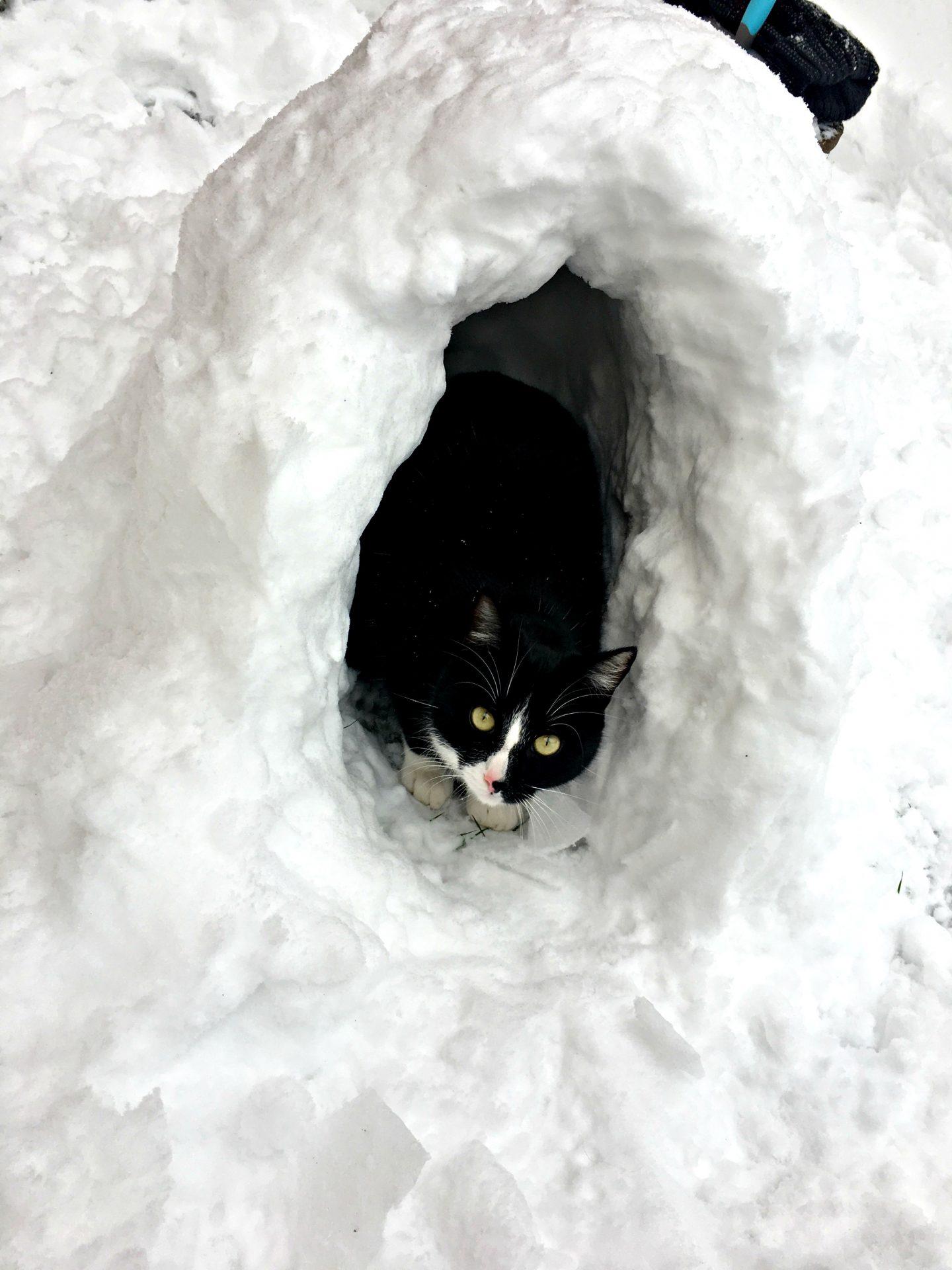 cat-sized igloo